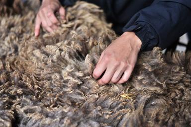 Tri de laine